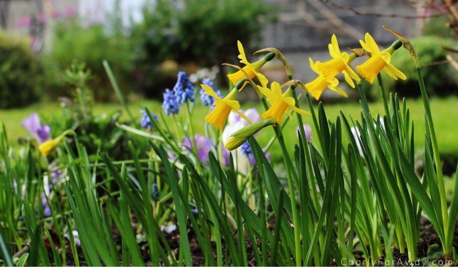 Printemps jardin botanique d'Edimbourg