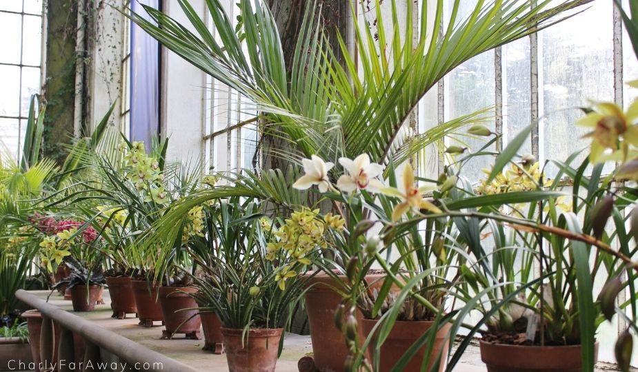 orchidées au jardin botanique d'Edimbourg