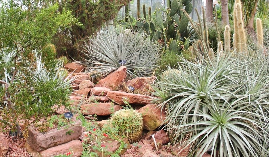 Serre aride jardin botanique Edimbourg
